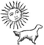 English Setter & Sun