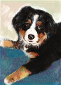 Colorful Bernese Mountain Dog Puppy