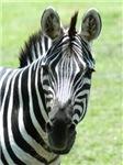 Zebra Products