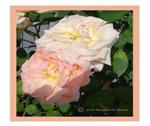 Mama's Two Beautiful Roses