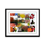 Colorful Autumn Photo Collage by Celeste Sheffey