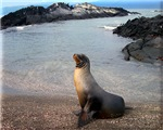 Sea Lion Galapagos Island