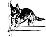 German Shepherd obedience retrieve
