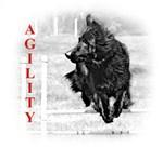 shepherd agility