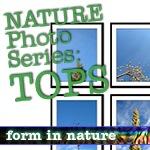 Nature Photo Series: TOPS