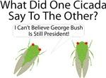 Cicada Jokes