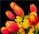 Easter Tulips and Roses