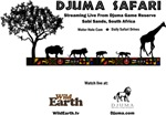 Djuma Safari Archive