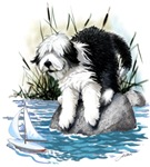Bearded Collie, by the shore
