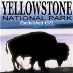 Yellowstone National Park Established 1872 Bison