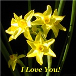 I Love You Daffodils