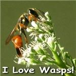 I Love Wasps (Golden Digger Wasp)