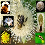 Photo Collage Flora & Fauna