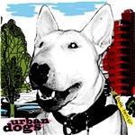 Urban Bull Terrier