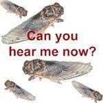 Cicada noise