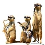 Meerkat Trio2