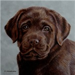 CHOCOLATE LABRADOR RETRIEVERS