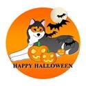 Black Siberian Husky Halloween
