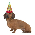 Smooth Dachshund Birthday Party