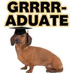 Graduation Dachshund
