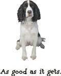 Good English Springer Spaniel