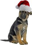 German Shepherd Santa
