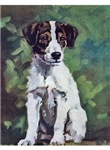 Jack Russell Terrier Art
