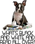 Boston Terrier Riddle