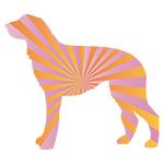 Scottish Deerhound Rays of Light