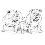 Bulldog Family Black