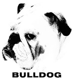 Bulldog Head Shot