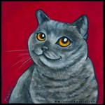 British Grey Blue Cat
