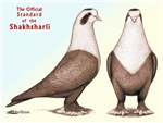 Shakhsharli Pigeon Standard