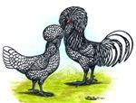 Silver Polish Fowl
