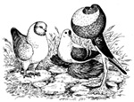 Three Pigeons Birthday