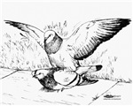 Pigeon Mates
