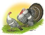 Narragansette Turkey Pair