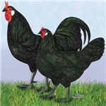 La Fleche Rooster and Hen