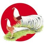 Japanese Yokohamas