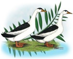 Magpie Drake and Duck