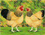 Wyandotte Rooster and Hen