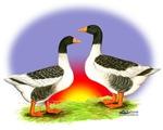 Pom Goose and Gander