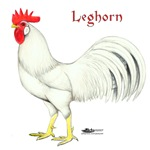 Leghorn White Rooster