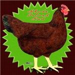Rhode Island Red Hen2