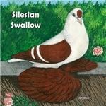 Silesian Swallow