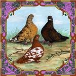 English Shortfaced Pigeons Framed