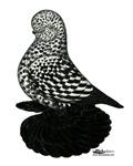 Splash Tumbler Pigeon