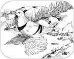 Moon Pigeon 1973