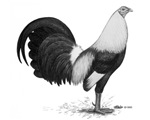 OE Game Grey Rooster
