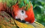 Parrotdise 1